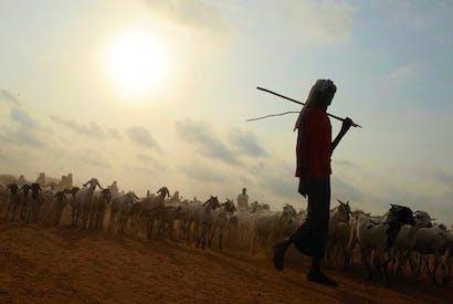 A Somali shepherd in Kenya