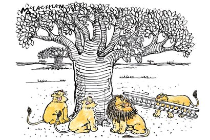 'I thought you said lions didn't climb trees.'