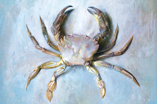 'Study of a Velvet Crab' c. 1870, presented by John Ruskin to the Ruskin School of Drawing (University of Oxford) in 1875