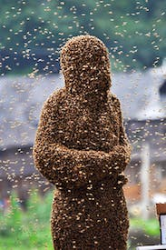 Lu Kongjiang, taking part in a 'bee beard' competition in Shaoyang, Hunan Province, China, 2011 From In Praise of Bees: A Cabinet of Curiosities by Elizabeth Birchall (Quiller Publishing, £30, pp. 255, ISBN 9781846891922)