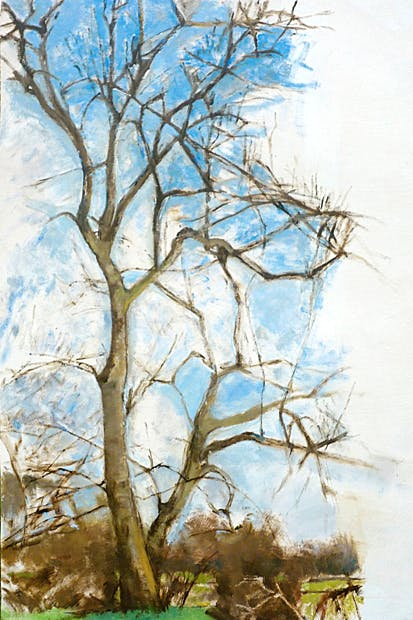 'Ash tree in Winter, 2010–13