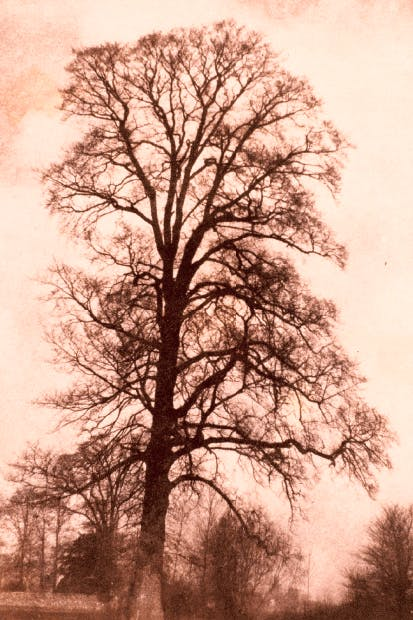 'The Great Elm at Lacock', 1843–45, by William Henry Fox Talbot