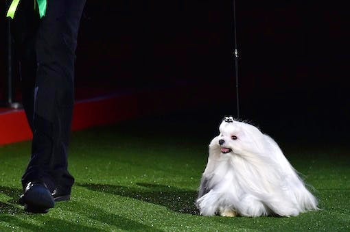 BRITAIN-ANIMAL-CRUFTS