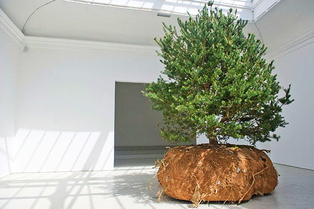 One of Céleste Boursier-Mougenot's Scots pines in the French Pavilion