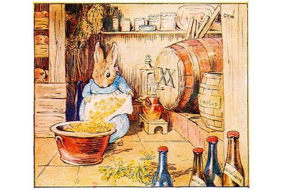 Cecily Parsley makes cowslip wine, illustration from'Cecily Parsley's Nursery Rhymes' by Beatrix Potter