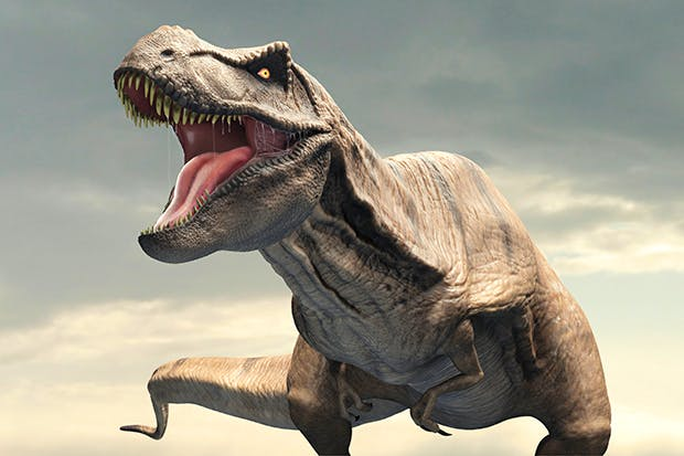 T. rex hunted live prey but wouldn't pass up a free meal if it sniffed one out