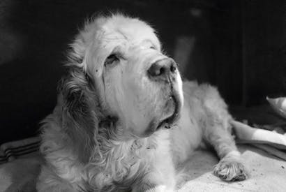 Gentlest and sweetest of dogs
