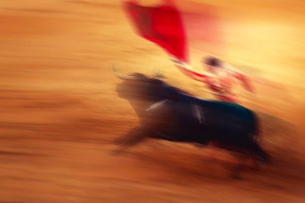 The demise of bullfighting has been predicted for 100 years, yet it lives on