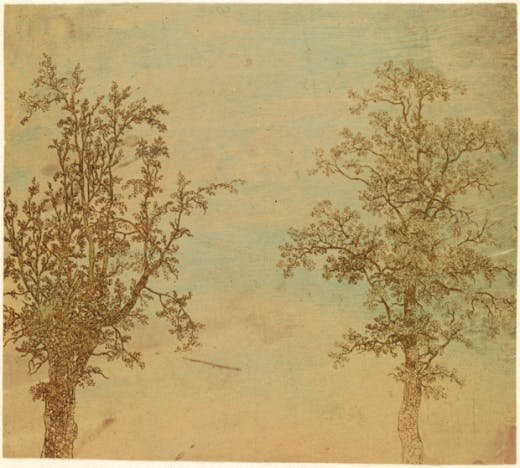'The Two Trees (An Alder and an Ash)', c. 1625–1630, by Hercules Segers. Lift-ground etching. Photo: Rijksmuseum