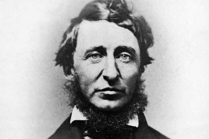 Thoreau: the poet-naturalist and political radical