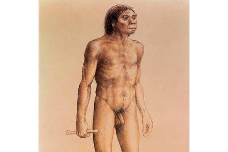 Our hero, homo erectus