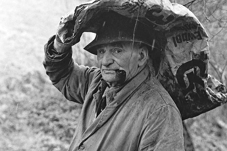 Archie Parkhouse, with ivy for sheep, Millhams, Dolton, 1975