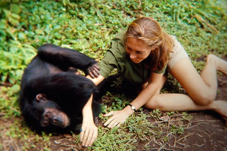 Monkey business: Jane Goodall
