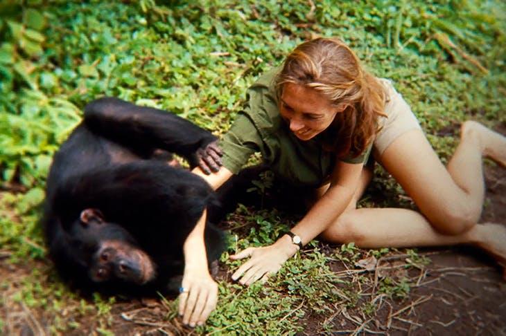 Monkey business: Jane Goodall