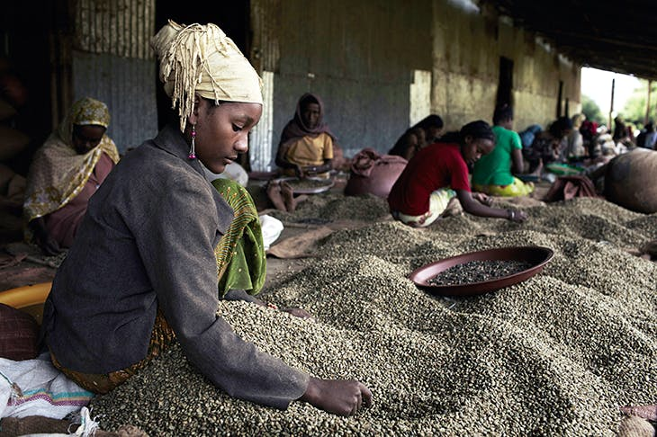 Women sort coffee beans at the Farmers' Cooperative Union outside Bonga, in the heart of the Kafa region