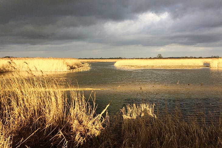 Moorish: Otmoor's beautiful, desolate landscape
