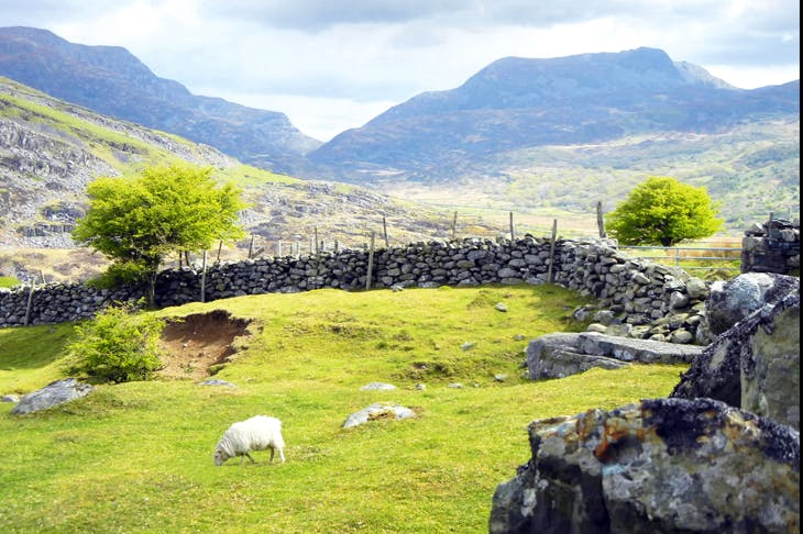 Drystone walling in the Brecon Beacons, Wales
