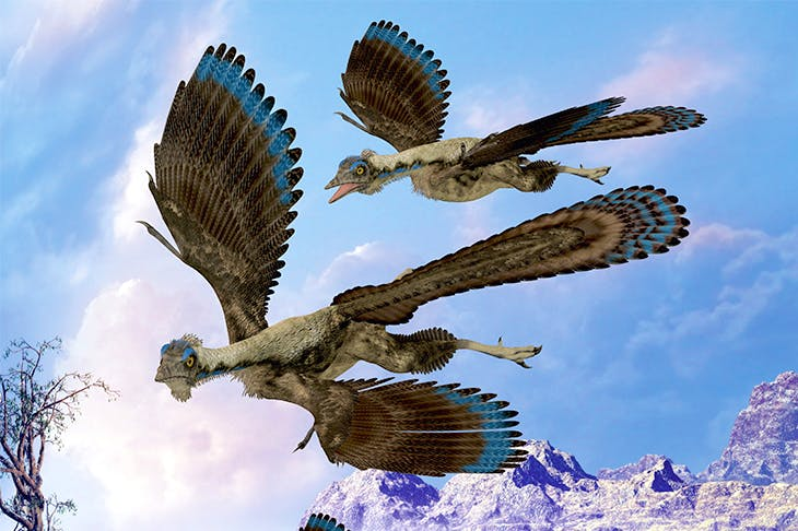 An imaginative depiction of Archaeopteryx, in the transitional phase between non-avian feathered dinosaurs and modern birds