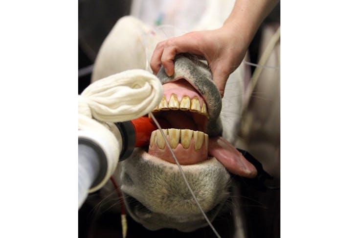 The joy of dentristy