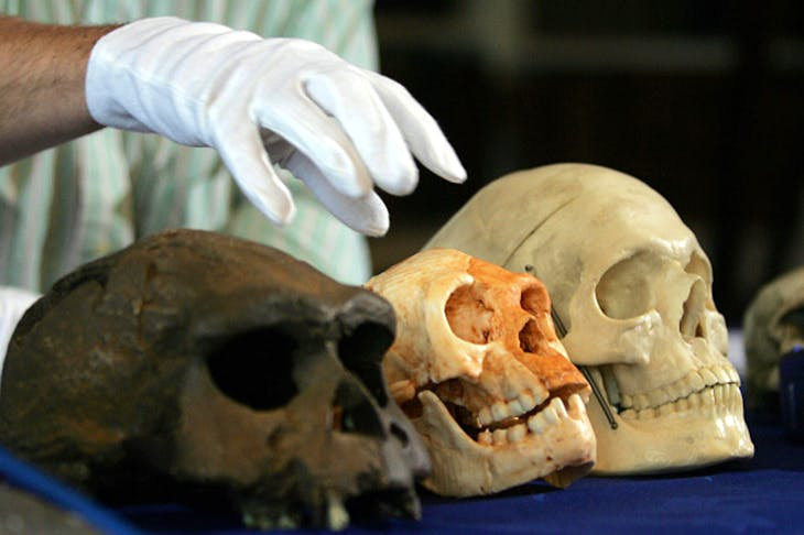 Homo floresiensis, living on the Indonesian island of Flores as recently as 18,000 years ago, had a skull the size of a grapefruit