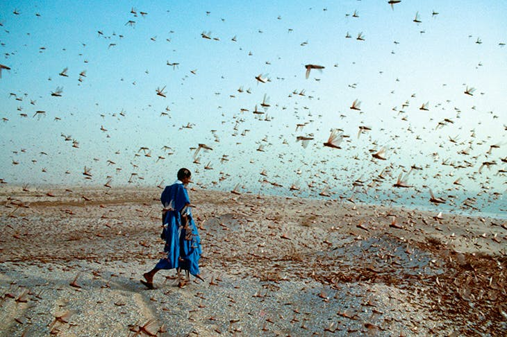 A plague of locusts in North Africa. Colin Everard himself describes driving on desert roads in a race against a 35-square-mile swarm