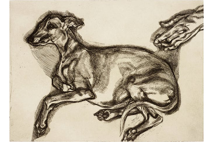 Going to the dogs: 'Pluto Aged 12', 2000, by Lucian Freud